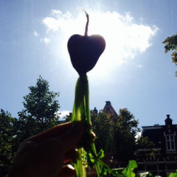 liefde voor groenten